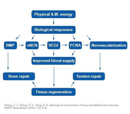 SWT_DR-graph-effects_EN_tc