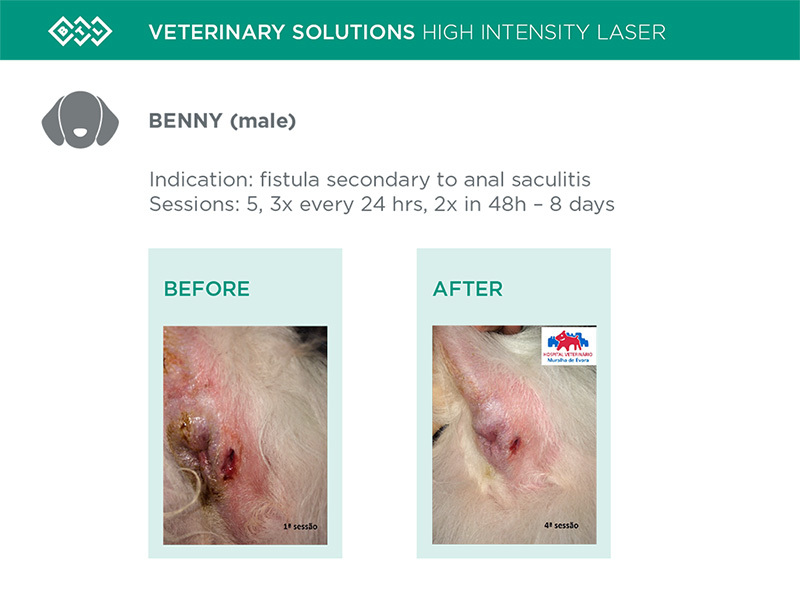 HIL_veterinary_solutions_BENNY_dog