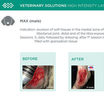 HIL_veterinary_solutions_MAX_dog