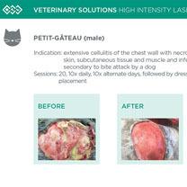 HIL_veterinary_solutions_PETIT_cat