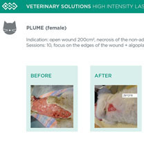 HIL_veterinary_solutions_PLUME_cat