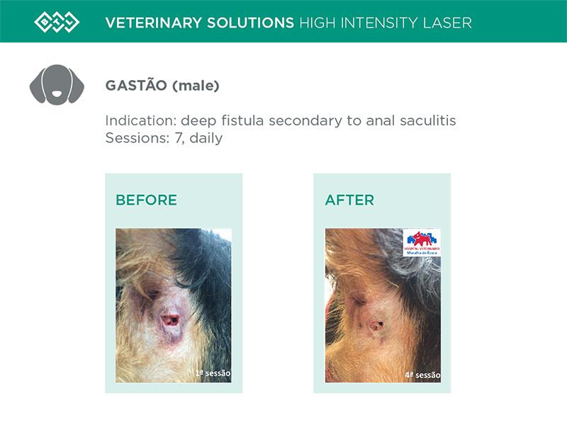 HIL_veterinary_solutions_GASTAO_dog