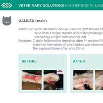 HIL_veterinary_solutions_GALILEU_cat