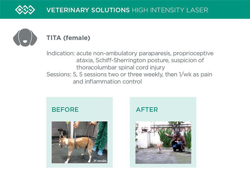 HIL_veterinary_solutions_TITA_dog